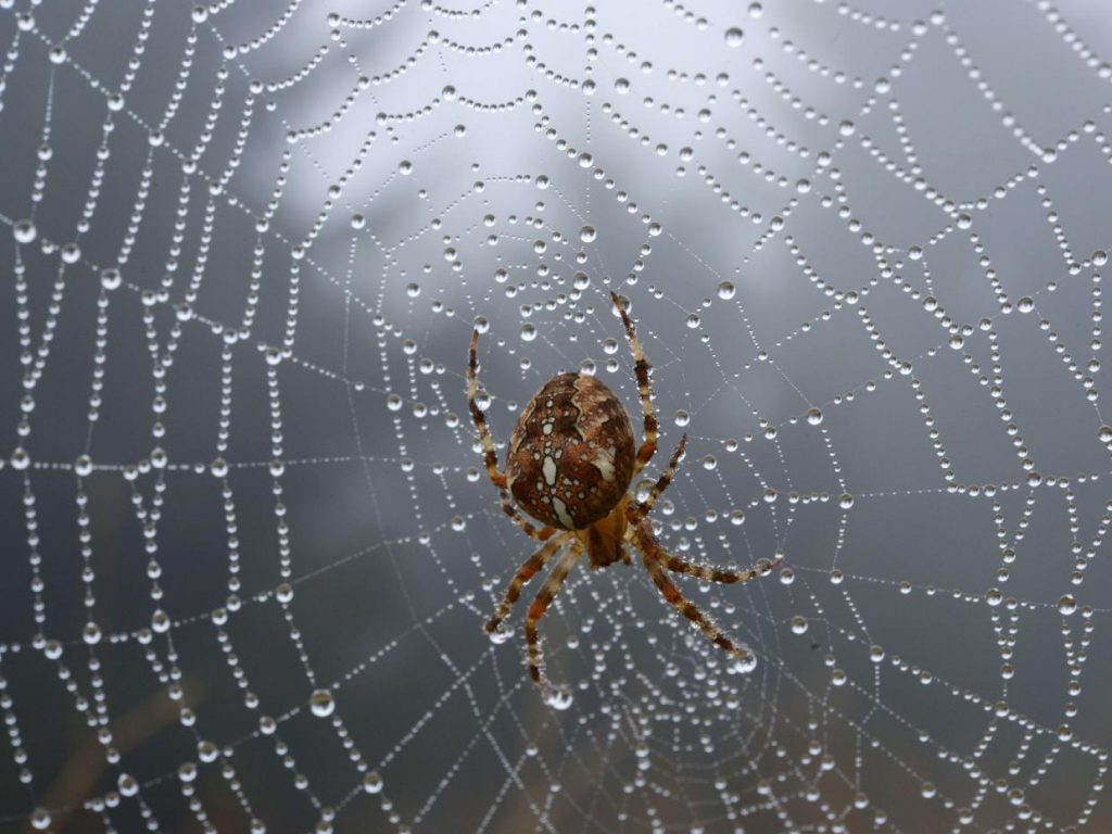 Animals in the Holy Quran – The Spider